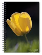 Tulip Flower Series 1 Spiral Notebook