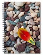 Tulip Petal And Wet Stones Spiral Notebook