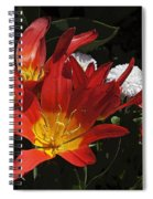 Tulips And Daisies Spiral Notebook