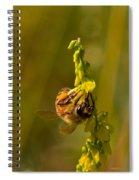 Tupelo Honey Spiral Notebook