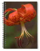 Turk's Cap Lily Spiral Notebook