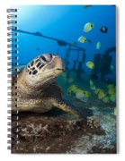 Turtle And Sealife Spiral Notebook