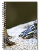 Turtle Conversation Spiral Notebook