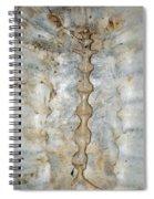 Turtle Spine Spiral Notebook