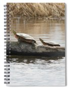 Turtles Pretending To Be Part Of The Log Spiral Notebook