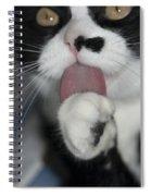 Tuxedo Kitty Lollipop Spiral Notebook