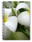 Twin Plumeria Flowers Spiral Notebook