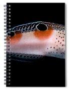 Twin Spot Wrasse Spiral Notebook