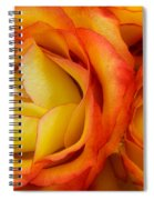 Twin Yellow Roses Spiral Notebook