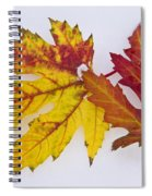 Two Autumn Maple Leaves  Spiral Notebook