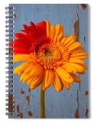 Two Color Gerbera Daisy Spiral Notebook