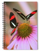 Two Colorful Butterflies On Cone Flower Spiral Notebook