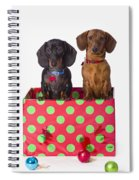 Two Dachshund Puppies Inside A Polka Spiral Notebook