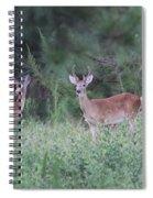 Two In Velvet Spiral Notebook