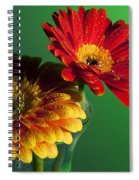 Two Orange Spiral Notebook