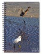 Two Strutting Egrets Spiral Notebook