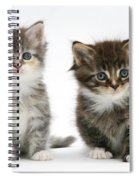 Two Tabby Kittens Spiral Notebook