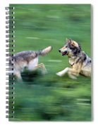 Two Wolves Running Through Meadow Spiral Notebook