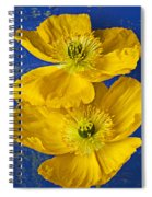 Two Yellow Iceland Poppies Spiral Notebook