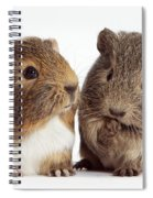 Two Young Guinea Pigs Spiral Notebook