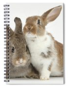Two Young Rabbits Spiral Notebook