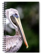 Ugly Beauty - Brown Pelican Spiral Notebook