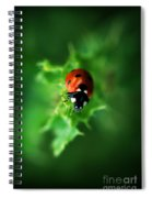 Ultra Electro Magnetic Single Ladybug Spiral Notebook