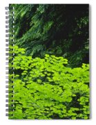 Umbrella Of Trees In Forest Spiral Notebook