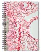 Umbrella Pine Stem Spiral Notebook