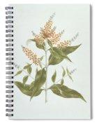 Umtar - Buddleia Polystachya Spiral Notebook