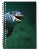 Underwater Close-up Of Smiling Spiral Notebook
