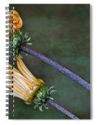 Unfurling Daisy Spiral Notebook