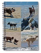 Uninhibited Creatures Spiral Notebook