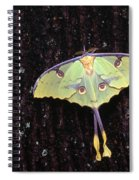 Unique Butterfly Resting On Tree Bark Spiral Notebook