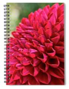 Unnamed Dahlia  4001 Spiral Notebook