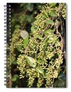 Unripened Inkberries Spiral Notebook