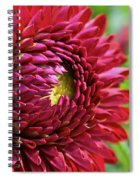Unveiling The Sun Spiral Notebook