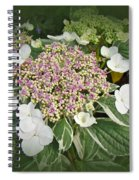 Variegated Lace Cap Hydrangea - Pink And White Spiral Notebook