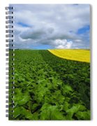 Vegetables, Cabbages Spiral Notebook