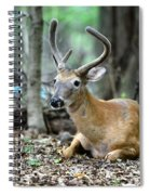 Velvet Buck At Rest  Spiral Notebook