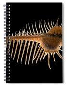 Venus Comb Murex Shell Spiral Notebook