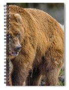Very Big Bear Spiral Notebook
