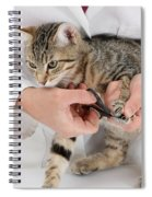 Vet Clipping Kittens Claws Spiral Notebook