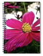 Vibrant Cosmos Spiral Notebook