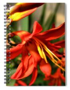 Vibrant Crocosmia Spiral Notebook