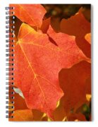 Vibrant Maple Spiral Notebook