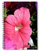 Vibrant Petunias Spiral Notebook