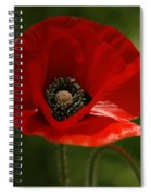 Vibrant Red Oriental Poppy Wildflower Spiral Notebook