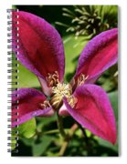 Vibrant Star Spiral Notebook