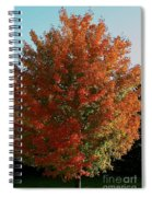 Vibrant Sugar Maple Spiral Notebook